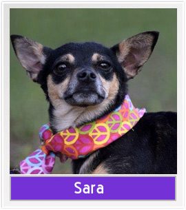 Mia from Capital Area Animal Welfare Society