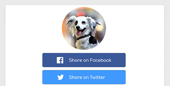 The New Petfinder Pro Dashboard, with a redesigned look and helpful new features, including the ability edit multiple pets at once, quickly share pets on social media, and access everything right from your phone.
